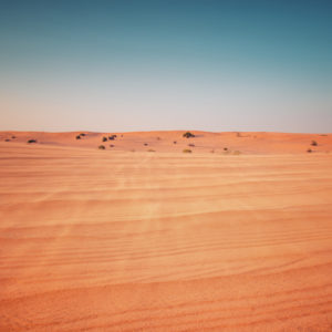 Deserts as Ecosystems and Why They Need Protecting